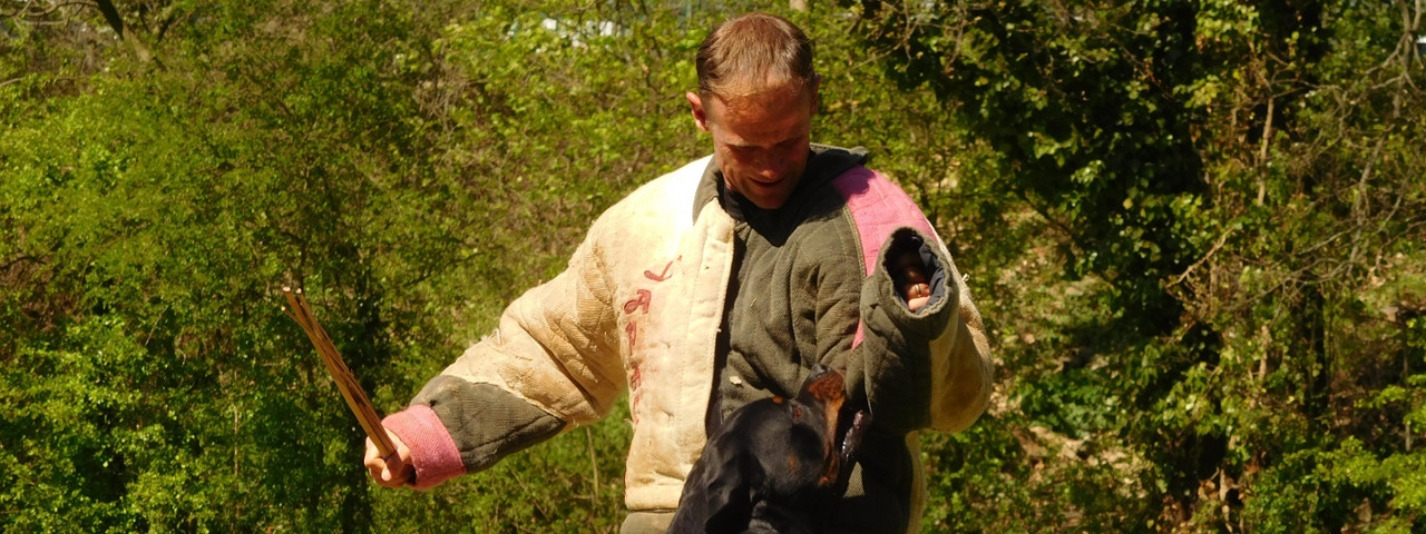 Entrainements chiens de sécurité, RING et RCI